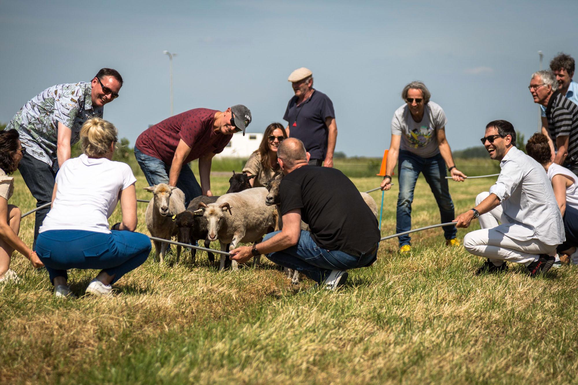 Workshop schapendrijven Landrucci Kromme Rijnstreek