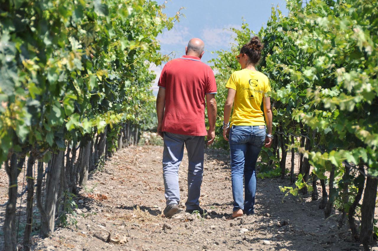 Biologische wijnboerderij Cantina Ariano Puglia