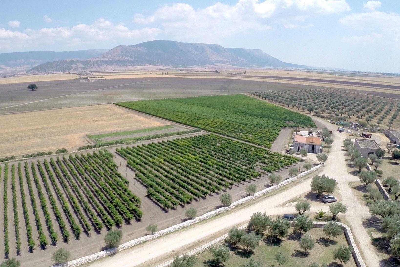 Biologische wijnboerderij Cantina Ariano Italië