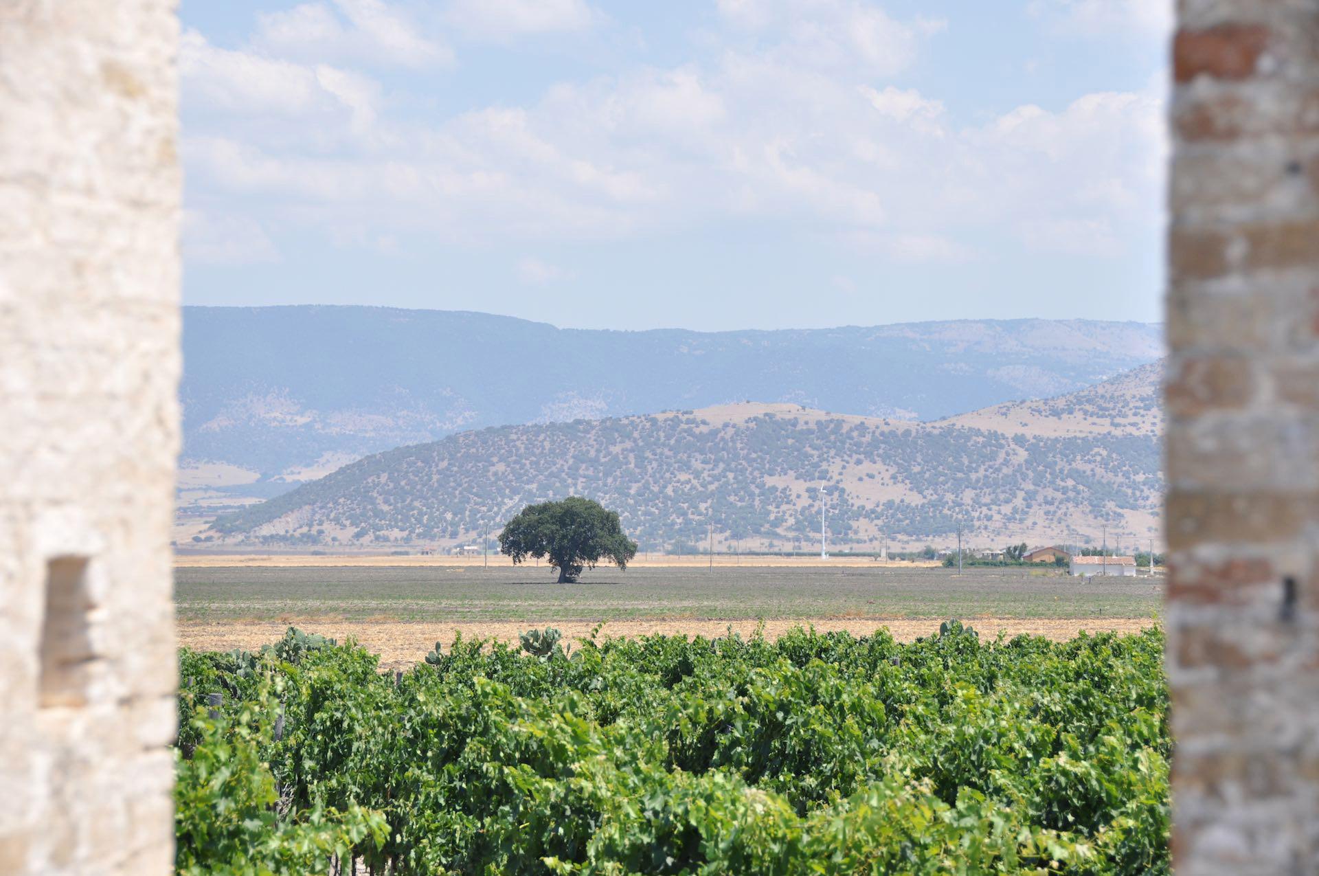 Wijngaarden Cantina Ariano Puglia Italië